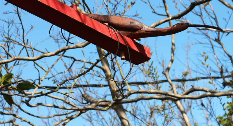 Sam McKamie's Birds in our Gardens
